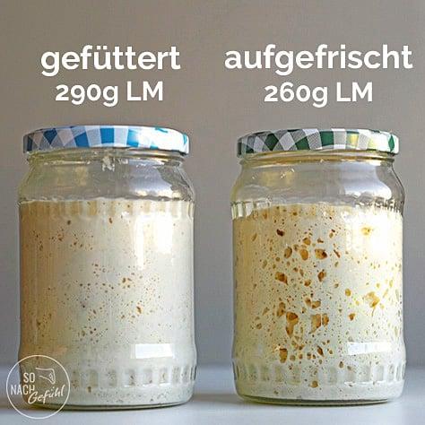 Weizensauerteig Lievito Madre (LM) gefüttert und aufgefrischt im Vergleich.